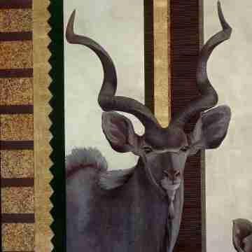 Koudou mâle